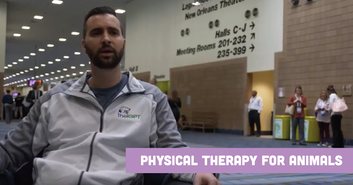 Physical Therapy for Animals