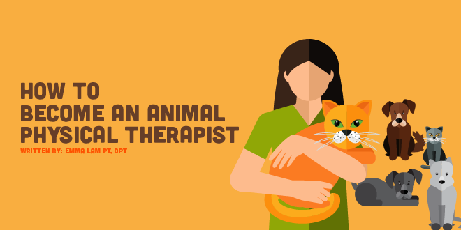 How to Become an Animal Rehabilitation Therapist