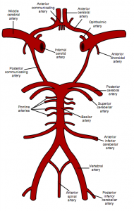 circle of willis optometry