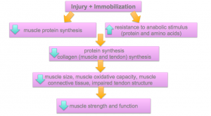 the influence of nutrition on injury recovery