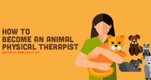 animal rehabilitation therapist