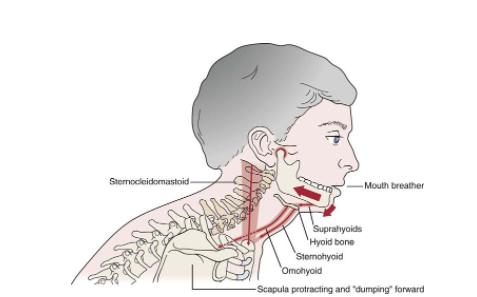 What Every New Grad Needs To Know About The Temporomandibular